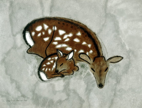 Silka deer and fawn pic