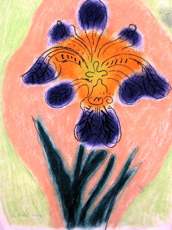 Wild Iris (purple/orange) pic